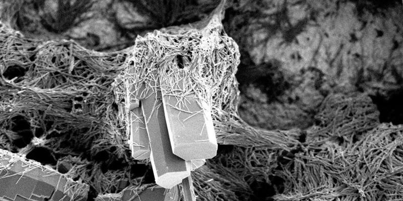 Andrea Rassell, Organic semiconductors imaged via Scanning Electron Microscopy (SEM). Photograph Zakir Hussein.