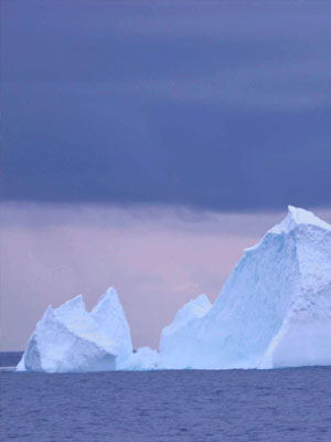 Passing icebergs a few days out from Davis Station. Photograph courtesy Wild System.