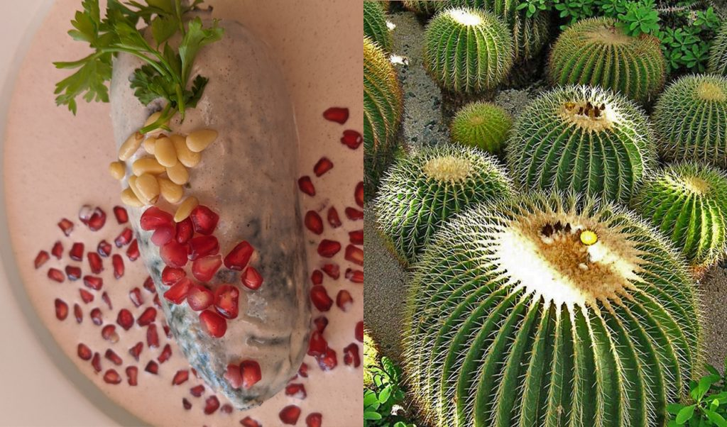 Chiles en Nogada, a dish served to celebrate Mexican Independence Day, but only during the month of September. In part a way of protecting one of the ingredients, the crystallized pulp of the Biznaga Cactus (acitron), that takes such a long time to grow and it is at risk of endangerment. Images courtesy the artist.