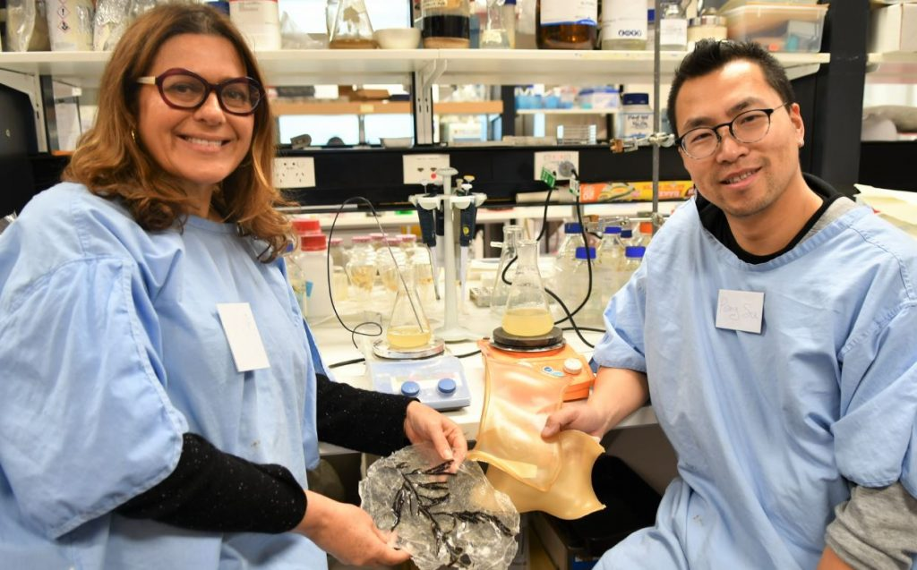 Niki Sperou, ANAT 2020 Synapse Artist in Residence at CMBD, and biotechnologist Dr Peng Su, working with marine algal biopolymers and bioplastics at Flinders University.