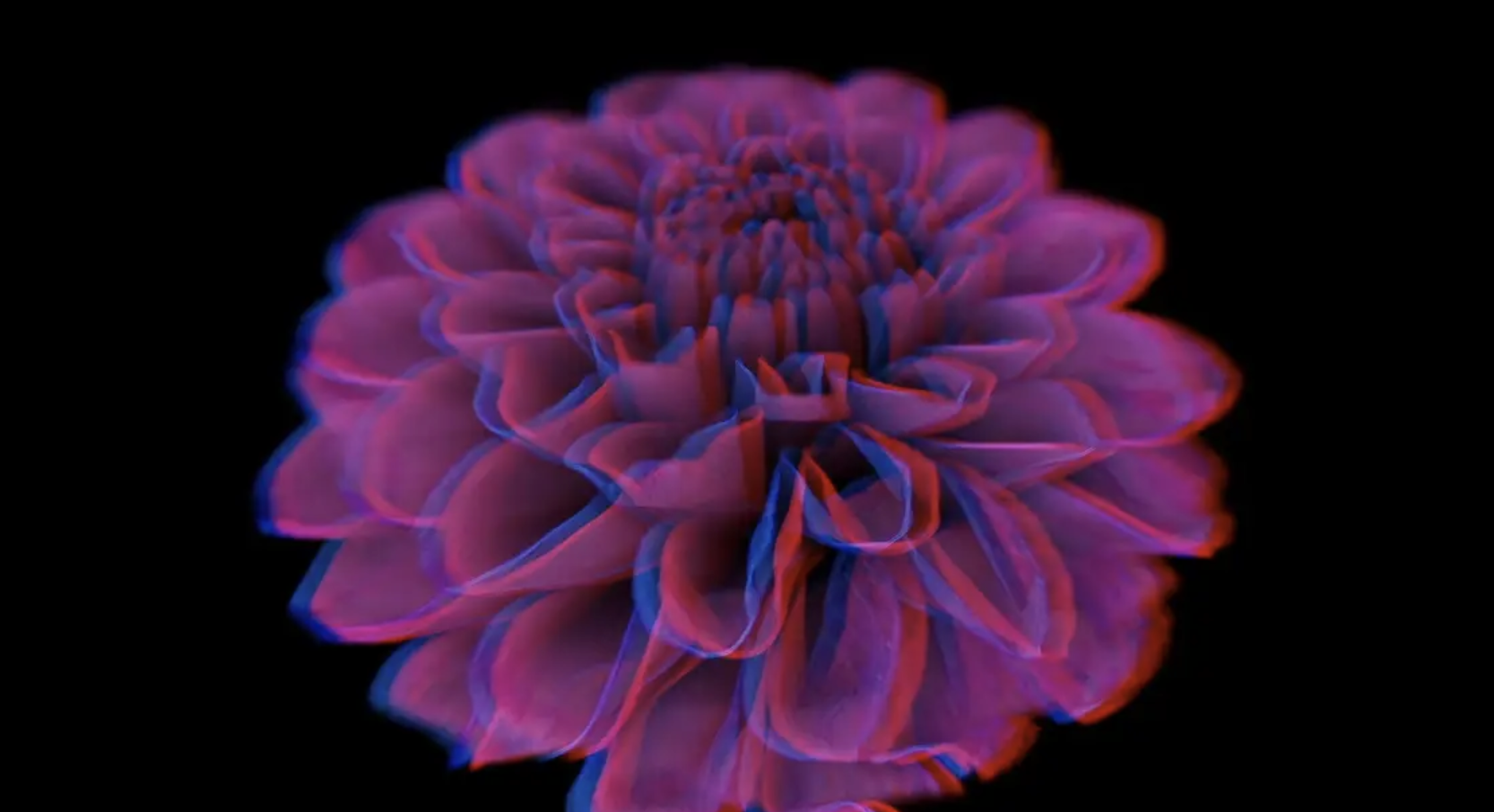 Erica Seccombe, BIG PINK, 2019, 3 min (looped), Single channel anaglyph 3D movie, to be viewed with red/cyan glasses. This work was created for the exhibition BIG PINK, 2019, Galerie Pompom.